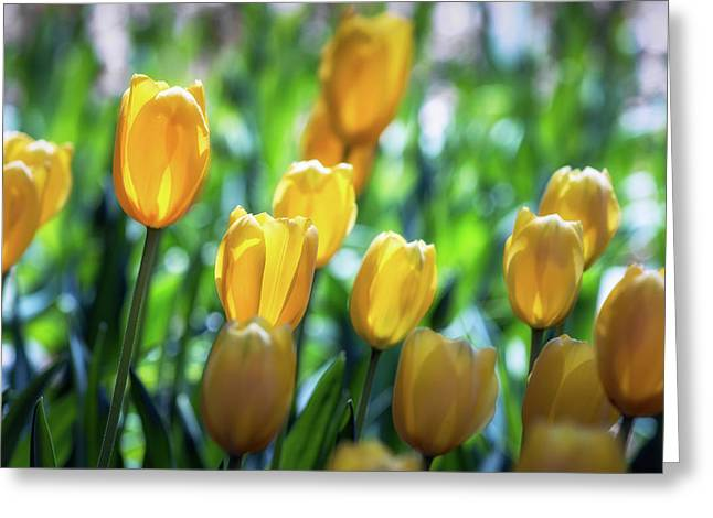 Backlit Greeting Card by James Barber