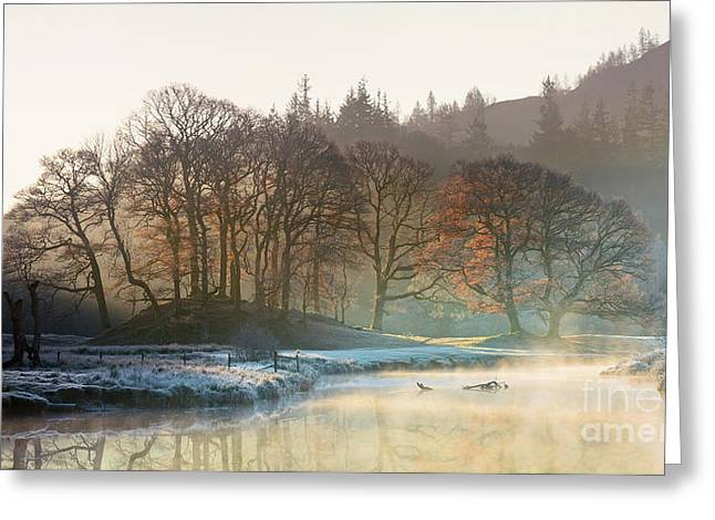 Backlit Trees On The River Brathay Greeting Card