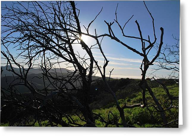 Greeting Card featuring the photograph Backlit Trees Overlooking Hillside by Matt Harang