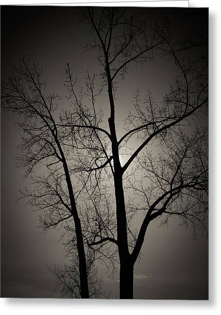 Backlit Trees Greeting Card
