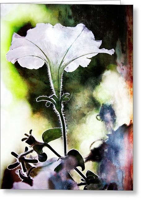 Backlit White Flower Greeting Card