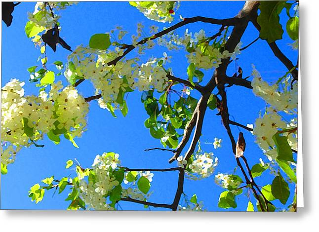 Backlit White Tree Blossoms Greeting Card by Amy Vangsgard