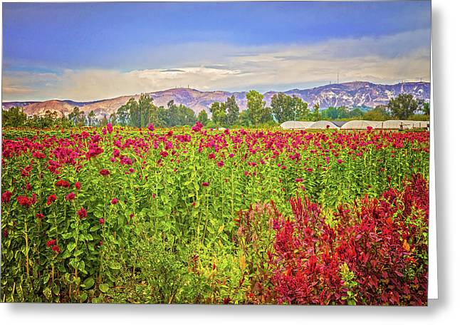 Backroad Beauty In Southern California Greeting Card