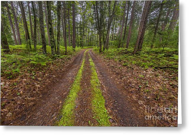 Backroad In Sleeping Bear Dunes Greeting Card by Twenty Two North Photography