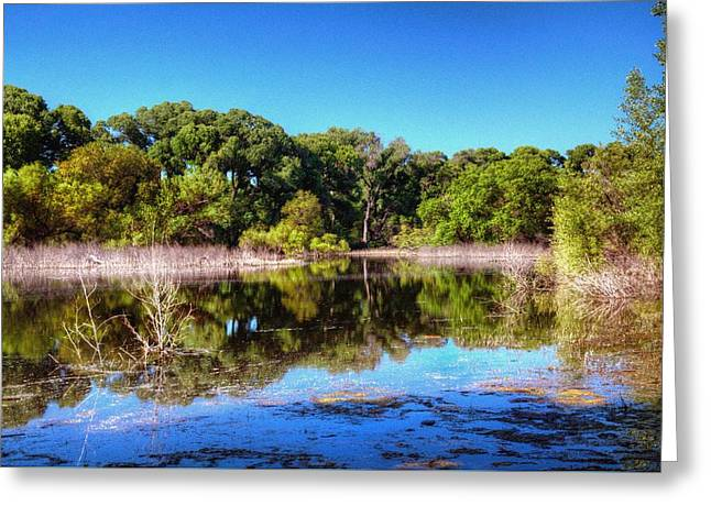 Backwoods By The Lake Greeting Card by Thomas  Todd