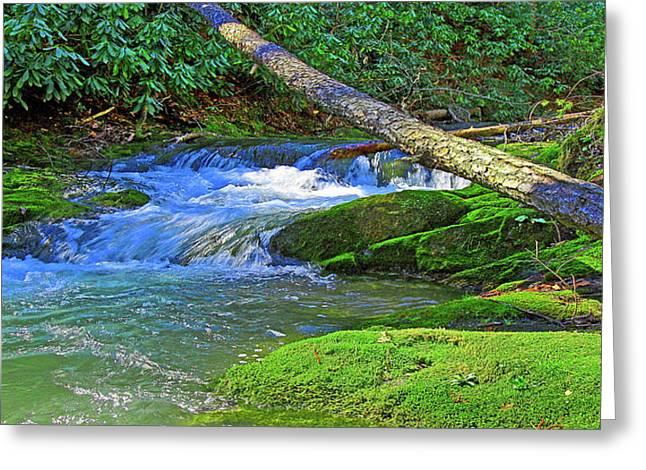 Backwoods Stream Greeting Card
