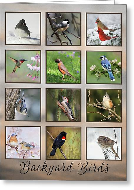 Greeting Card featuring the photograph Backyard Birds by Lori Deiter