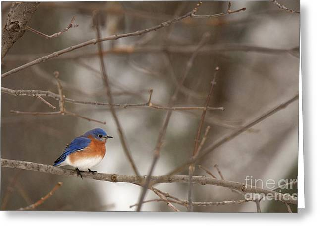 Backyard Blue Greeting Card