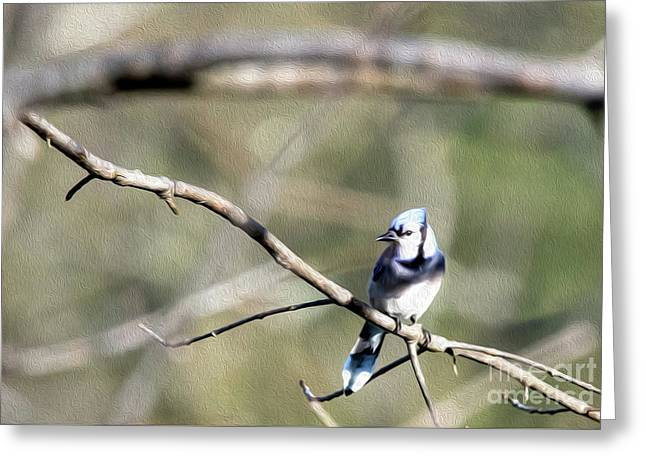 Backyard Blue Jay Oil Greeting Card