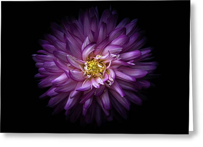 Greeting Card featuring the photograph Backyard Flowers 20 Color Version by Brian Carson