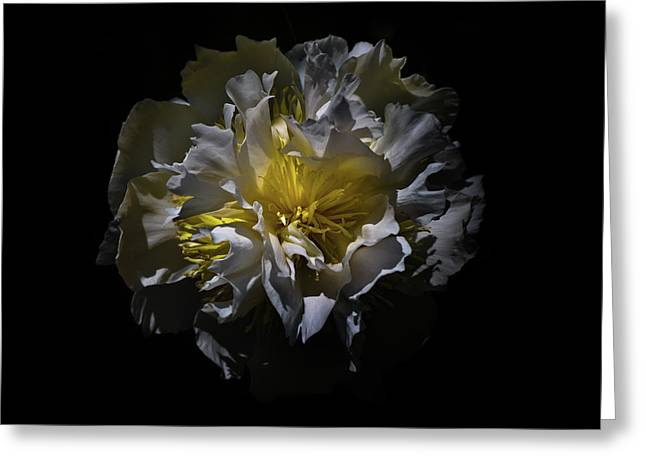 Greeting Card featuring the photograph Backyard Flowers 25 Color Version by Brian Carson