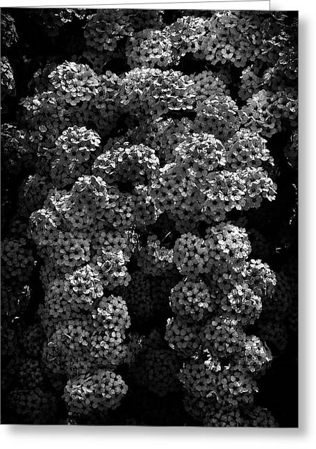 Greeting Card featuring the photograph Backyard Flowers In Black And White 21 by Brian Carson