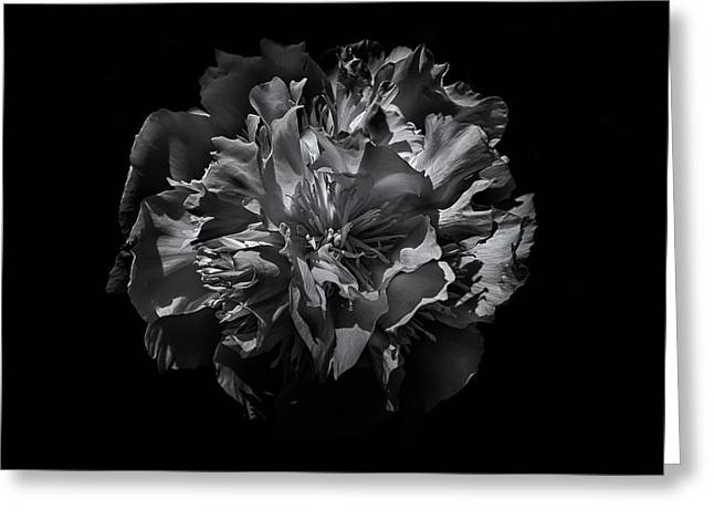 Greeting Card featuring the photograph Backyard Flowers In Black And White 25 by Brian Carson