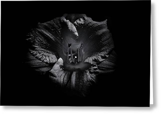 Greeting Card featuring the photograph Backyard Flowers In Black And White 26 by Brian Carson