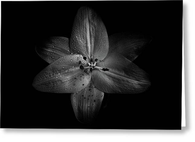 Greeting Card featuring the photograph Backyard Flowers In Black And White 28 by Brian Carson