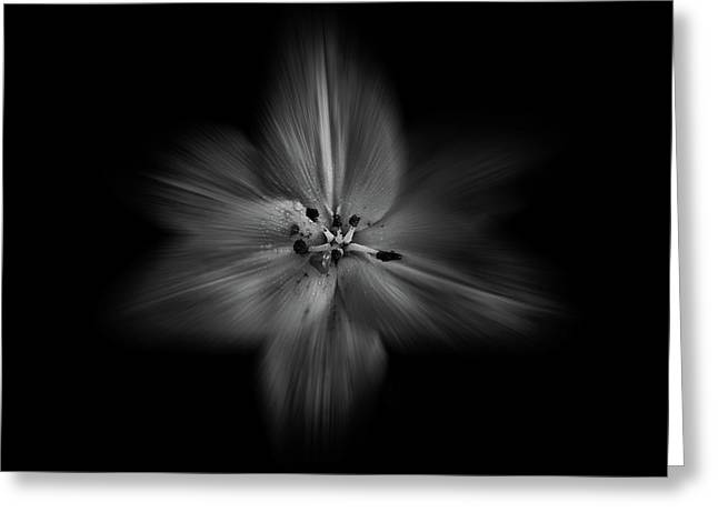 Backyard Flowers In Black And White 28 Flow Version Greeting Card