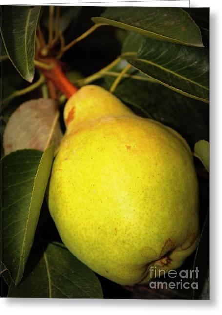 Backyard Garden Series - One Pear Greeting Card by Carol Groenen