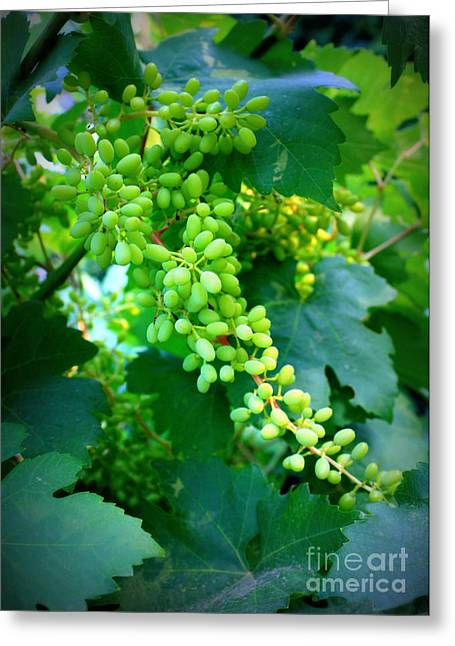 Backyard Garden Series - Young Grapes Greeting Card by Carol Groenen