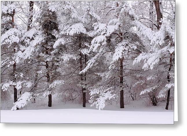 Greeting Card featuring the photograph Backyard Trees by Don Nieman