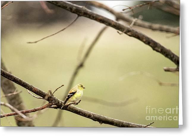 Backyard Yellow Greeting Card
