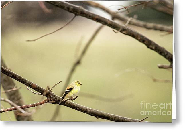 Backyard Yellow Greeting Card