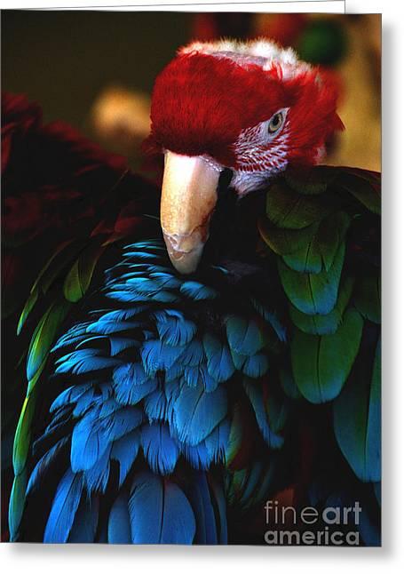 Bad Ass Bird 2 Greeting Card by David Frederick