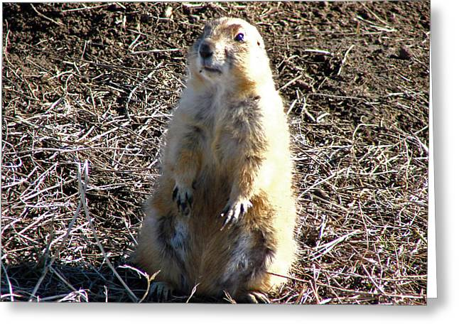 Badlands Prarie Dog Greeting Card by Dave Clark