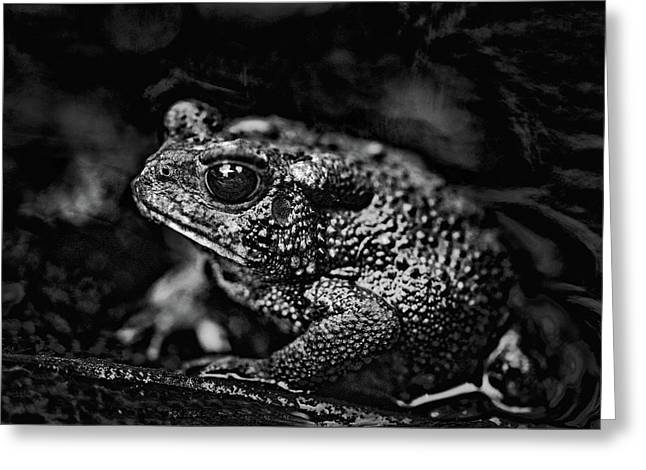 Bah Humbug  American Toad In Black And White Greeting Card by Mother Nature
