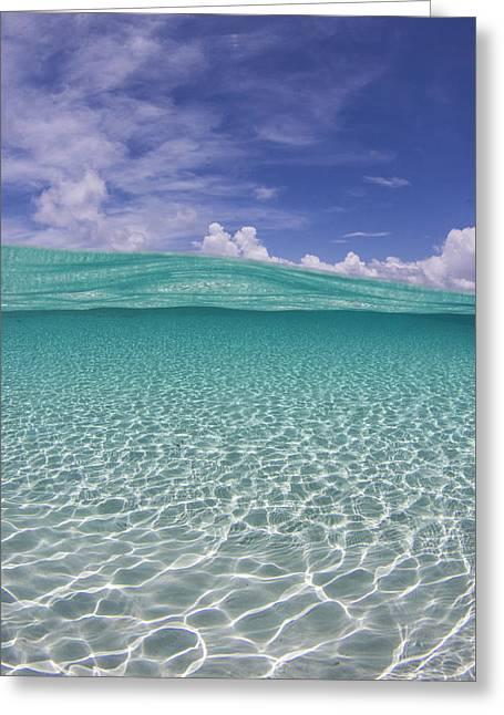 Bahama Beauty Greeting Card by Adrian E Gray
