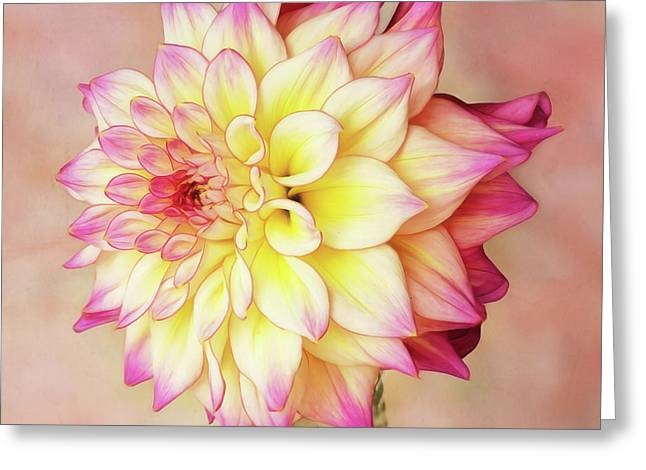 Greeting Card featuring the photograph Bahama Mama Dahlia Square by Mary Jo Allen