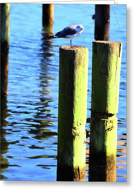 Greeting Card featuring the photograph Balanced by Jan Amiss Photography