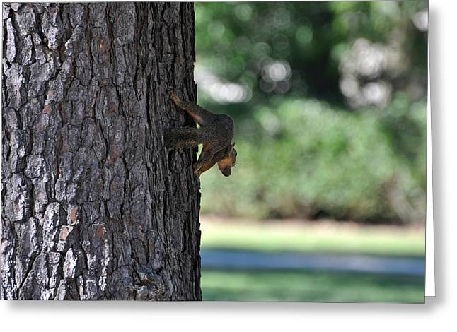 Balancing A Nut Greeting Card by Teresa Blanton