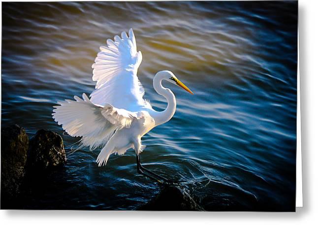 Balancing Act  Great White Egret  Greeting Card