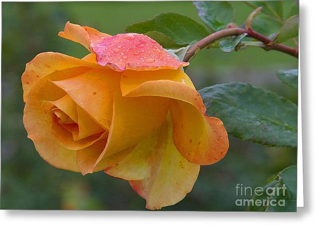 Balboa Rose Greeting Card