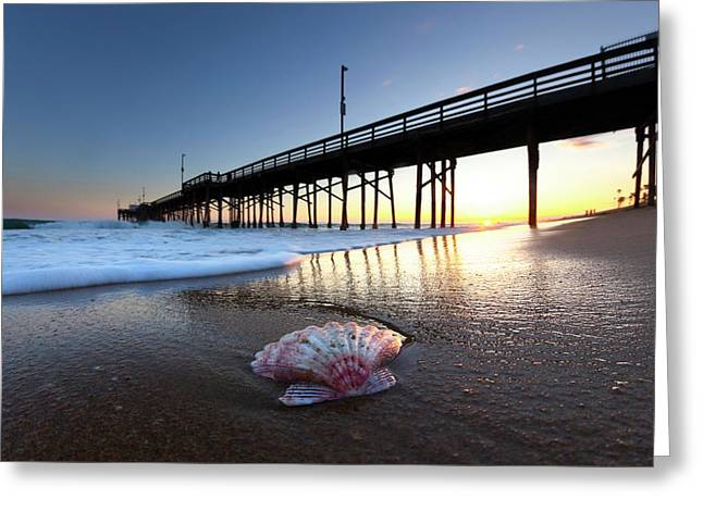Balboa Shell. Greeting Card by Sean Davey