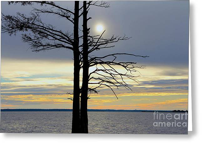 Bald Cypress Silhouette Greeting Card