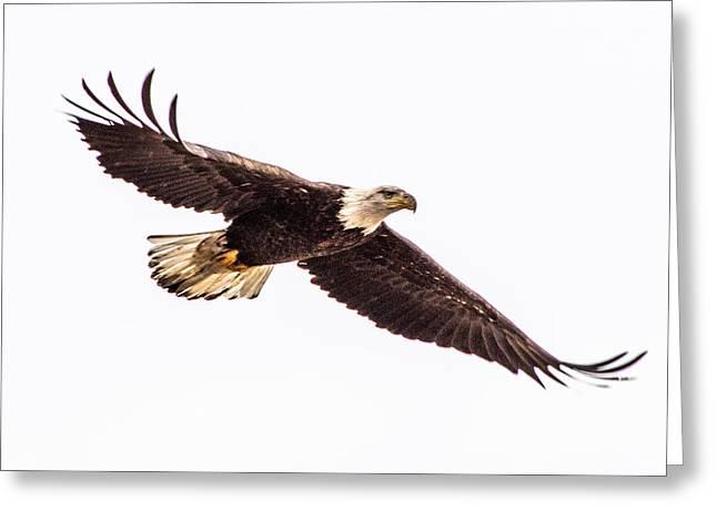 Bald Eagle 2 Greeting Card