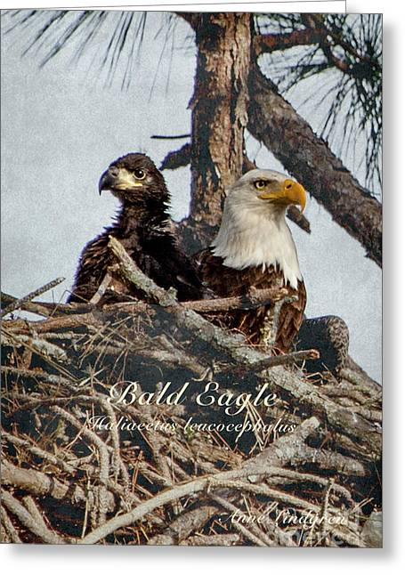 Bald Eagle And Chick Greeting Card