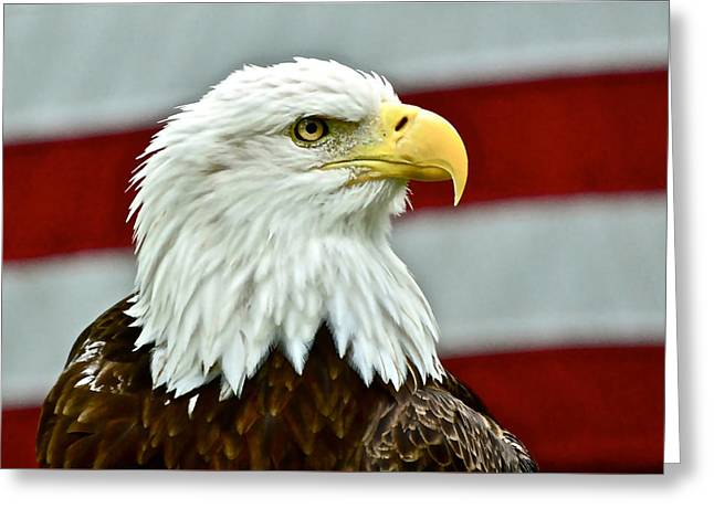 Bald Eagle And Old Glory Greeting Card
