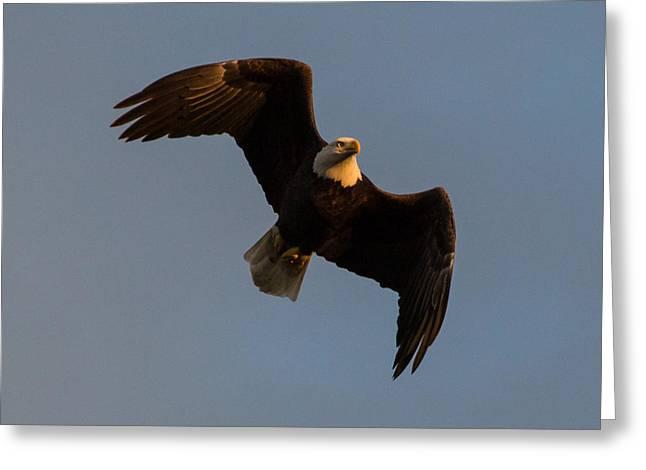 Bald Eagle At Sunrise Greeting Card