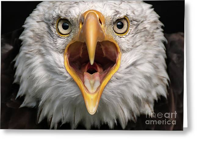 Bald Eagle Calling Greeting Card