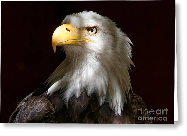Bald Eagle Closeup Portrait Greeting Card