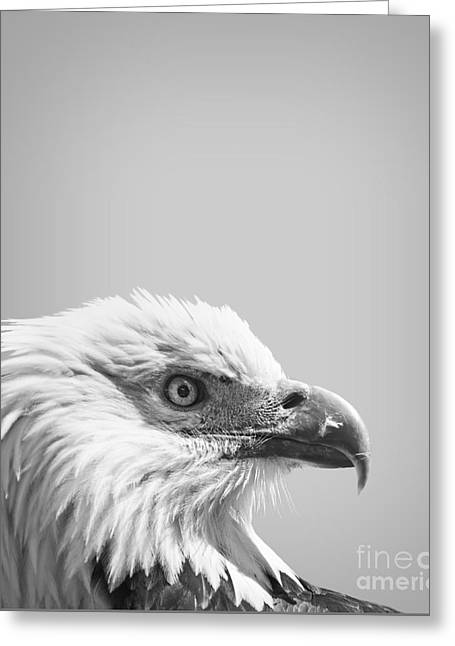 Bald Eagle Greeting Card by Delphimages Photo Creations