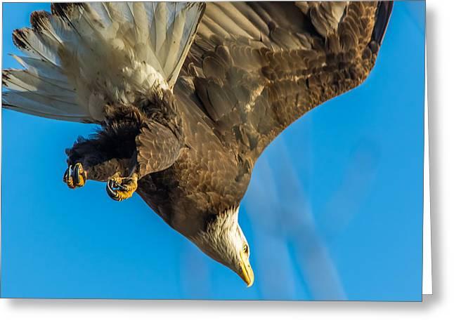 Bald Eagle Dive Greeting Card