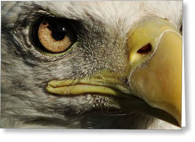 Bald Eagle Eye Greeting Card