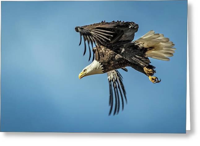 Bald Eagle Flight 1 Greeting Card