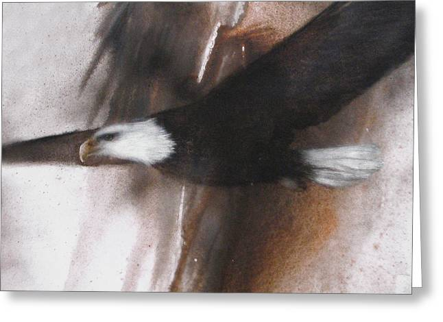 Bald Eagle Flight Greeting Card