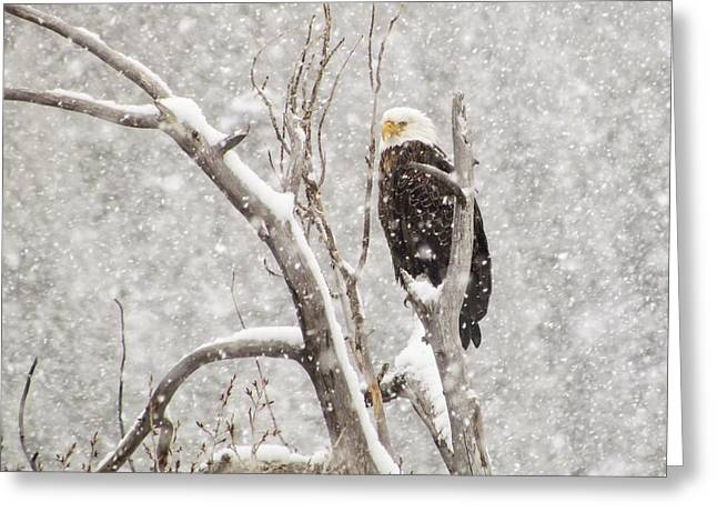Bald Eagle In A Blizzard 1 Greeting Card by LeAnne Perry