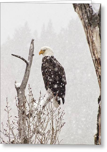 Bald Eagle In A Blizzard 2 Greeting Card by LeAnne Perry