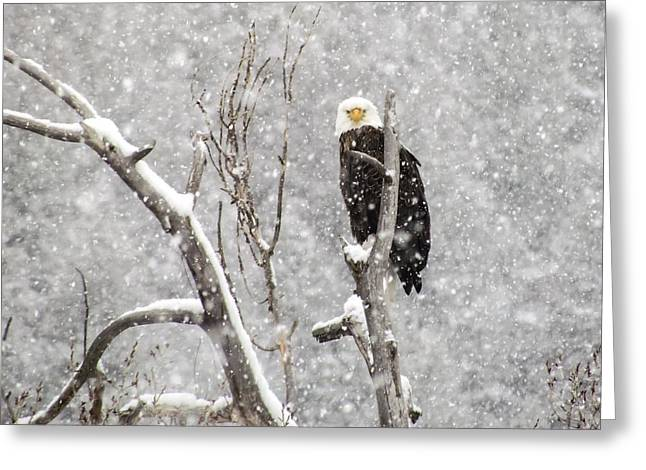 Bald Eagle In A Blizzard 3 Greeting Card by LeAnne Perry